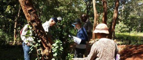 Team_examining_tree_50